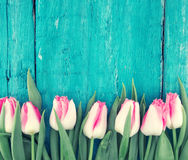 Frame of tulips on turquoise rustic wooden background. Spring fl. Owers. Spring background. Greeting card for Valentine`s Day, Woman`s Day and Mother`s Day. Top Stock Photos