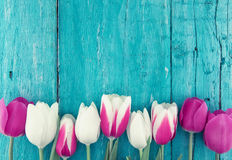 Frame of tulips on turquoise rustic wooden background. Spring fl royalty free stock photos