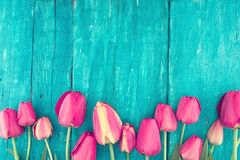 Frame of tulips on turquoise rustic wooden background. Spring fl Royalty Free Stock Image