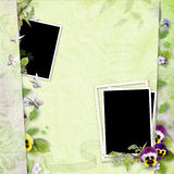 Frame for two photos with pansy flowers Royalty Free Stock Photo