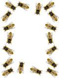 Frame van bijen Stock Afbeelding