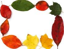 Frame van bladeren stock afbeeldingen