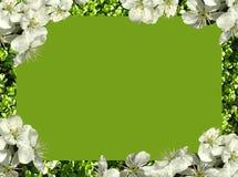 Frame van bloemen stock fotografie