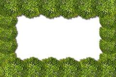 Frame van bloemen Stock Afbeelding