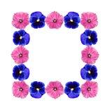 Frame van bloemen Royalty-vrije Stock Foto