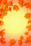 Frame van bloemen Stock Foto