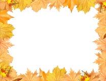 Frame van de herfst gele bladeren met lege plaats Stock Afbeelding