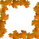Frame van de herfstbladeren Stock Foto's