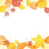 Frame van de herfstbladeren Stock Fotografie