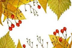 Frame van de herfstbladeren en bessen Stock Afbeeldingen