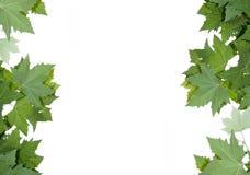 Frame van esdoornbladeren. Stock Foto