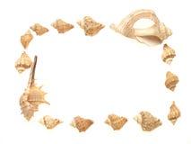 Frame van exotische overzeese shell Stock Foto's
