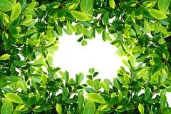 Frame van Groen verlof Royalty-vrije Stock Fotografie