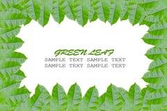 Frame van groene bladeren Royalty-vrije Stock Afbeeldingen