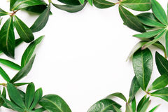 Frame van groene bladeren Royalty-vrije Stock Fotografie