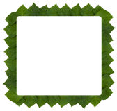 Frame van het blad van rhoicissusrhomboidea Royalty-vrije Stock Foto's