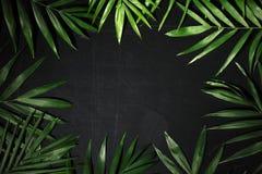 Frame van palmbladen Stock Foto's
