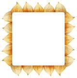 Frame van Physalis Royalty-vrije Stock Foto's