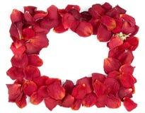 Frame van rode roze bloemblaadjes Royalty-vrije Stock Foto's