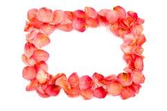 Frame van rode roze bloemblaadjes Royalty-vrije Stock Foto