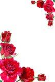 Frame van rode rozen Royalty-vrije Stock Foto's