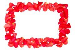 Frame van roze bloemblaadjes Stock Foto