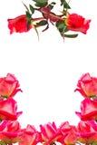 Frame van roze rozen Royalty-vrije Stock Foto