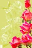 Frame van roze rozen op groene achtergrond Royalty-vrije Stock Afbeeldingen
