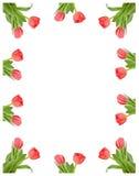 Frame van tulpen Royalty-vrije Stock Afbeelding