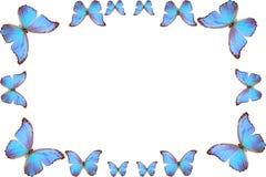 Frame van vlinder Stock Fotografie