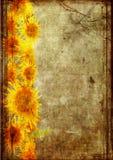 Frame van zonnebloem grunge Stock Afbeeldingen