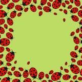 Frame with variegated ladybugs. Variegated Ladybug frame on a green background Stock Images