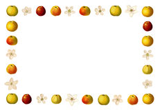 Frame with varieties of apples and apple blossoms Stock Images