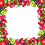 Frame with various berries. Vector illustration. Royalty Free Stock Image