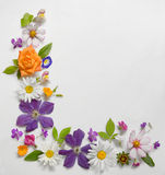 Frame of Various Flowers Isolated Royalty Free Stock Photography