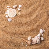 Frame from various shells on sand Stock Images