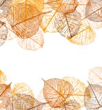 Frame of vector autumn leaves Royalty Free Illustration