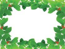 Frame verde com bagas vermelhas Fotos de Stock Royalty Free