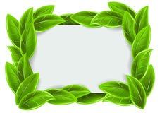 Frame verde com folhas Fotos de Stock
