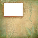 Frame verde da borboleta Foto de Stock Royalty Free