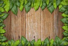 Frame verde da folha Imagens de Stock