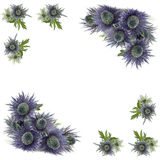 Frame of violet flowers Stock Photo