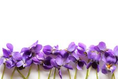 Frame with violet. Royalty Free Stock Images