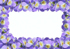 Frame from violet viola. On white background Royalty Free Stock Images