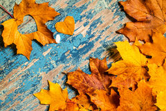 Frame from vivid colorful autumn leaves on the grunge wooden cyan desk Royalty Free Stock Photos