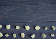 Frame voor groetkaart Achtergrond voor een banner met bloemen, gift en ruimte voor het copywriting Malplaatjebanner met bloem voo stock afbeeldingen