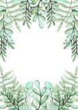 Frame With Watercolor Green Ferns And Herbs Stock Photo