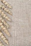 Frame of wheat ears on burlap background Stock Photos