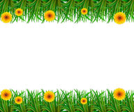 Frame. White background with sunflower and grasses frame Stock Photo