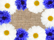 Frame with white and blue flowers Royalty Free Stock Photography
